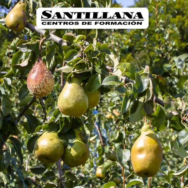 Curso online de Sanidad de las plantas Santillana Formación