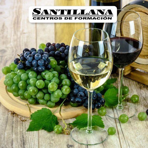 curso estructura vitivinicola caracteristicas vinos españoles